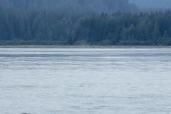 _MG_4668a (markbyzewski) Tags: alaska ugly humpbackwhale glacierbaynationalpark