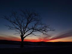 Earth's Silhouetted Sunset (EyeoftheImage) Tags: travel trees winter sunset sky tree nature rural landscape landscapes exploring ngc sunsets nightsky ruralamerica greatnature miminal flickrsfinestimages1 flickrsfinestimages2