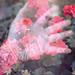 Enter Spring | Bloom