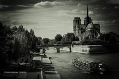 Notre Dame de Paris (steff808) Tags: blackandwhite bw paris france blancoynegro seine nikon noiretblanc francia iledefrance notredamedeparis biancoenero nikond600 nikon2485
