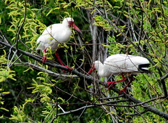 14 Ibis Harkers Island NC 8865