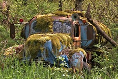 old abandoned overgrown truck moss rust antique oil tanker