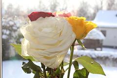 Roses (Ankar60) Tags: vintage design 60s sweden interior swedish 70s sverige 1970 1960s 1970s seventies 70 60 sixties tal svensk 1960 interir svenskt
