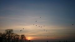 #autumn #tree #birds #sunset #istanbul #istanbulcity #clouds #Turkey #sonyxperiaz2 #sonyxperia #xperiaz2 #sonyz2 #xperia #z2 #impressive #flying (slymnhk) Tags: autumn sunset tree birds clouds turkey flying istanbul z2 impressive istanbulcity xperia sonyxperia xperiaz2 sonyxperiaz2 sonyz2