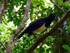 Iguazu (Arg)-69
