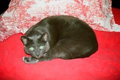 A2e-31Jan-01Feb2015-Lomo100CN-01-027 (aaron_anderer) Tags: cat canon frank eos lomography flash a2e