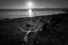 Sunset madness (haqiqimeraat) Tags: sunset bw seascape reflection monochrome contrast skyscape landscape mono scotland blackwhite nikon dundee tokina ultrawide uwa d7100 1116mm