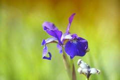 purple (gwuphd) Tags: zeiss diy bokeh homemadelens f19 140mm projectionlens kipronar