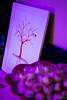 OF-Casamento-LuísaBruno-171 (Objetivo Fotografia) Tags: wedding friends party man amigos men mom bride dress brothers sister amor mulher maquiagem dia família evento bolo alegria cerveja casamento mulheres weddingdress amigas festa casal pai luisa decoração bruno galera makingof ceva doces brinde mãe cabelo vestido noiva homens gurizada irmã whitedress guris celebração padrinhos acessórios faily noivo noivos vestir caipiras espumante penteado preparação madrinhas moçada mesadedoces salãodebeleza felipemanfroi eduardostoll bridemade objetivofotografia weiandturishotel carloscâmara giovanaefany