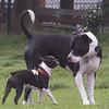 16-05-15_untitled_867 (Daniel.Lange) Tags: dog philadelphia dogs dogdayafternoon spado columbussquarepark
