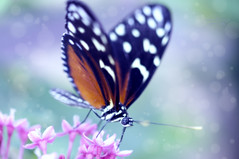 (mariola aga) Tags: flowers macro art closeup butterfly dreamy effect