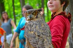 DSC_3575 (hellotristan) Tags: girls birds festival nikon hawk fair medieval owl lamb prey renaissance nikonphotography nikond7000