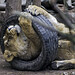 Young lioness playing with the tyre