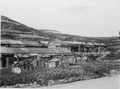 Busan scene, Dec 1952 (m20wc51) Tags: korea busan 1952