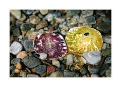Playeando... (ngel mateo) Tags: espaa beach andaluca spain stones duo shell playa pearl andalusia concha almera gravel mediterraneansea piedras marmediterrneo elejido grava balerma do ncar ngelmartnmateo ngelmateo