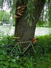 iconX_  20162016-06-1314-11-16 (C_Baltrusch) Tags: olive crossroad crossbones kafue madeofsteel stahlrad veloheld iconx bikespresso
