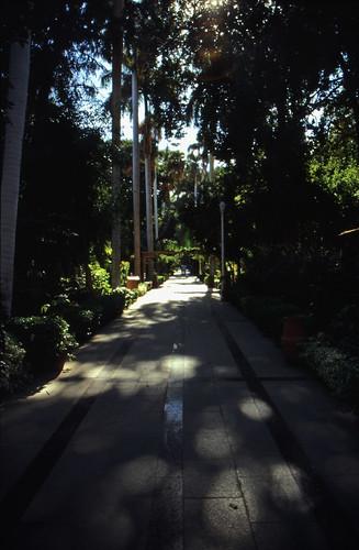 """Ägypten 1999 (065) Assuan: Botanischer Garten, Elnabatat's Island • <a style=""""font-size:0.8em;"""" href=""""http://www.flickr.com/photos/69570948@N04/27135096366/"""" target=""""_blank"""">View on Flickr</a>"""