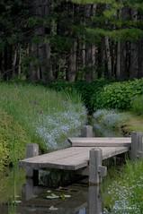 Jardin Japonnais au Jardin Botanique de Montral... / Japanese garden of the Montreal Botanical Garden. (Pentax_clic) Tags: robert juin pentax montreal jardin warren kr botanique 2016 japonnais imgp4215