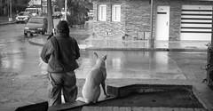 friends (Fer Gonzalez 2.8) Tags: street leica dog man rain radio photography blackwhite leicadlux4