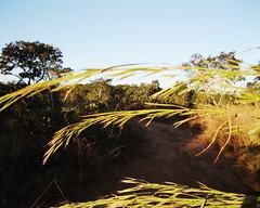 Aldeia Quatro Cachoeiras (fergprado) Tags: travel brazil sky tree planta nature brasil natureza culture cu rvore cultura tribo aoarlivre