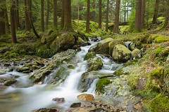 Autumn River Stream Tollymore Forest (Edouard Trichereau) Tags: autumn game forest river stream long exposure tour thrones tollymore