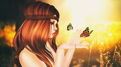 Simplicity is natures first step, and the last of art (akashiy) Tags: summer sun sunlight field sunrise butterfly free