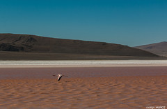 Laguna Roja (rockdrigomunoz) Tags: rojo laguna ave naturaleza norte viajes