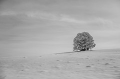 L'Arbre Blanc (PaxaMik) Tags: winter white snow tree hiver horizon neige arbre blanc pur blackandwhitephotos puret airpur arbreblanc paysagedeneige