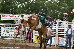Blythewood Rodeo 2016-60 (Perry B McLeod) Tags: sc cowboys barrel bull racing bulls riding rodeo cowgirl calf saddle bronc blythewood roping ipra