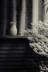 _MG_5276 color / reflections (doug_r) Tags: blackandwhite bw house home reflections washington shadows japanesemaple vases issaquah tigermountain melancholia blancetnoir blancoynegre canon5dclassic 20160707 2016dtrosenoffallrightsreserved jupiter11f40135mm pscccolorcorrectsharpenlrduotonecoloradjust
