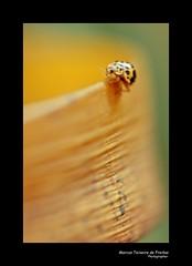 DOF com inseto (Marcos Teixeira de Freitas) Tags: brazil macro closeup brasil canon bug insect 100mm inseto 50d marcosteixeiradefreitas