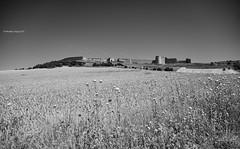 Wakes over Uruea (Modesto Vega) Tags: blancoynegro monochrome field wall monocromo blackwhite nikon wake thistle wheat campo fullframe muralla cardo uruea estela camposdecastilla nikond600