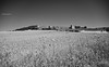 Wakes over Urueña (Modesto Vega) Tags: blancoynegro monochrome field wall monocromo blackwhite nikon wake thistle wheat campo fullframe muralla cardo urueña estela camposdecastilla nikond600