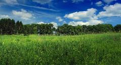 Sugarcamp Mountain (2) (Nicholas_T) Tags: trees summer sky nature field grass clouds pennsylvania meadow cumulus publicdomain endlessmountains freephoto freeimage loyalsockstateforest lycomingcounty cc0 sugarcampmountain sugarcampmountainroad