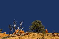 Poor lonesome tree #3 (Isabelle Gallay) Tags: blue trees orange usa tree nature colors america landscape landscapes utah fuji couleurs canyon bleu fujifilm brycecanyon paysage arbre amrique etatsunis fujix30