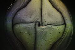 4 (kelemengabi) Tags: vortex symmetry galaxy liquid vibration nonlinear standingwave chladni cymatics nonnewtonian kymatik gabrielkelemen