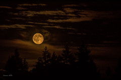 Summer Moon in June (jeanmarie shelton) Tags: trees sky moon nature silhouette night clouds landscape outdoors nikon cloudy outdoor fullmoon nightsky jeanmarie jeanmarieshelton