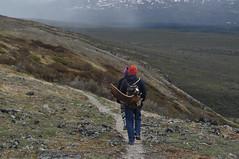 DSC_0777 (David.Sankey) Tags: alaska alaskarange mountains mountainrange denali denalinationalpark hiking nature park nationalparkdenalinationalparkandpreserve mckinley travel fog rivers savageriver savagealpinetrail trial savagealpine moose antler shed foundmooseshed mooseantler biology