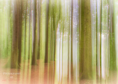 The Forest ( Explore ) (Lee Summerson) Tags: park uk trees england forest canon woods europe durham unitedkingdom sigma icm sedgefield northeastengland durhamuk sigma18300 hardwickpark intentionalcameramovement eos7d canonuk