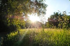 sunshine (Werner Schnell Images (2.stream)) Tags: sun sunshine sonne sonnenschein ws