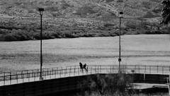 Enjoy the Day (Shot by Newman) Tags: people bw water 35mm daylight walkway coloradoriver ilford ilforddelta400 southwestus rockformations mojavedesert naturewalk arizonanevada shotbynewman