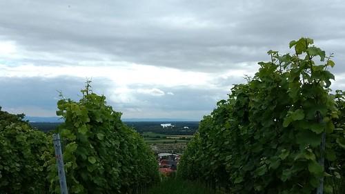 Blick nach Süden auf den Rhein