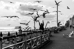 A little Hitchcock moment (dodgyhoodoo) Tags: brighton gulls seafront allrightsreserved 2016andrewohara