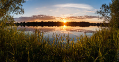 A Sun's lullaby (A. Stavrovich) Tags: trees sunset summer sky panorama sun nature water beautiful grass sunshine silhouette june closeup clouds reflections scenery russia outdoor wildlife wideangle rivers stacking sunrays hdr mosquitoes novgorod canonef1740mmf4l canon5dmarkii