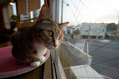 Cat (428sr) Tags: cat nikon neko   miaw hiyori