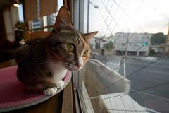 Cat (428sr) Tags: cat nikon neko   miaw hiyori