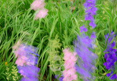 June 23, 2008 (merripat) Tags: pink flowers motion blur flower color green photoshop blurry lab purple windy pinkflower wildflowers breeze wildflower purpleflower breezy larkspur purpleflowers pinkflowers labcolor larkspurs pixelbender