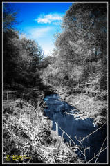 Blue & Black (mikesteph0) Tags: tree nature wet water scenery outdoor foliage flowersplants lr4