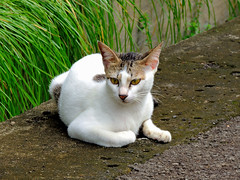 Bruno (esavitri) Tags: pet animal cat kitten feline kucing binatang