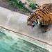 Crouching Tiger ...